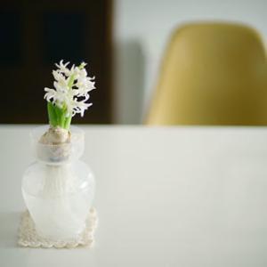 オンボロ社宅に花が咲く。