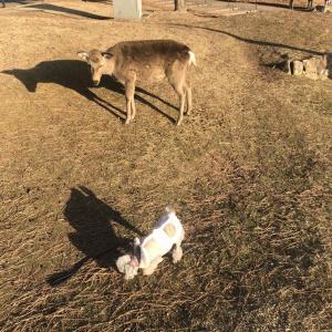 鹿とたわむれてきました。
