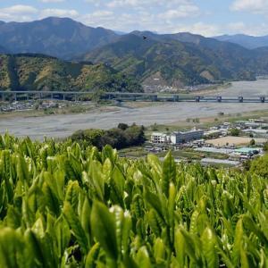 竜爪山~賤機山~浅間神社(トレラン)