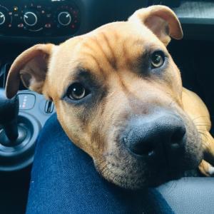 移民局へ犬と遠足!