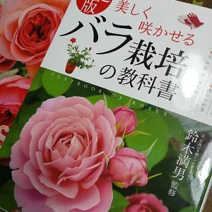 バラの葉むしり