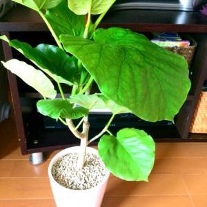 【風水的おかたづけ術】植物のパワーを取り入れてみる 1