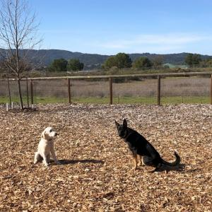 Dog park, the second time Part 1 〜二回目のドッグパーク パート1〜