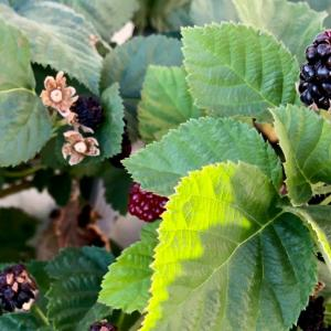 A reason why we can't harvest the berries 〜収穫できないベリーの秘密〜