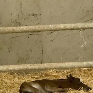 A baby horse 〜馬の赤ちゃん〜