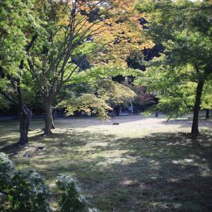 岡山後楽園を写した!