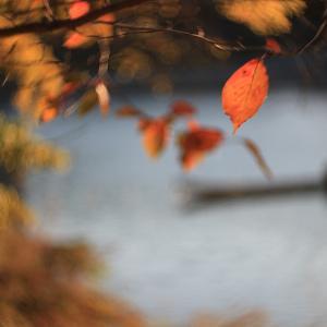後楽園の紅葉を写しました!