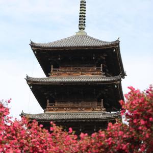 総社 五重塔を写しました! 梅は、まだまだです