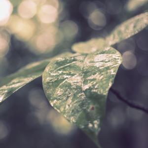 雨の岡山自然保護センターを写しました!
