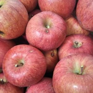 わけありリンゴ、食べてみて下さい!