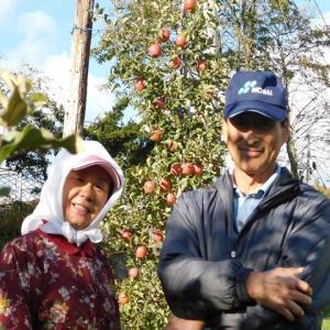 田子の美味しいリンゴ・残りわずかですっ!