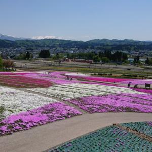 奥只見レクリエーション都市公園の芝桜