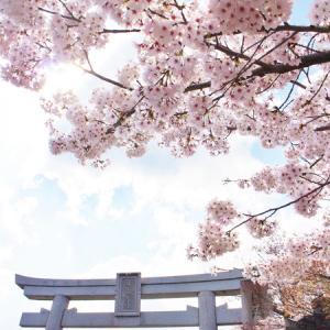 比叡山麓の桜達・・・+ワーク延期について