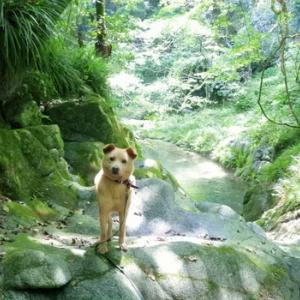 夏の自然界と命達