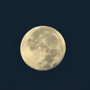 月とアオバト。