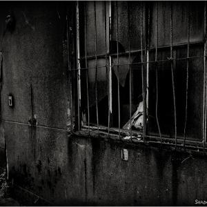 Security Window Bars...