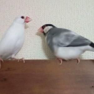 スノさんが亡くなって2か月半が過ぎました☆株式…富士フイルムを買ってみました!