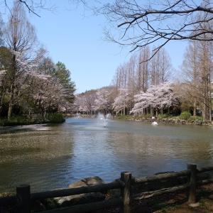 さんぽ(貝殻山公園)