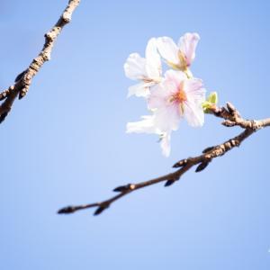 10月の花見 ♪