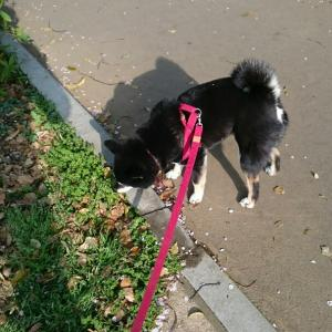 「犬」散歩