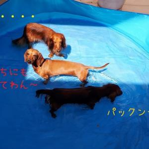 【またプール】