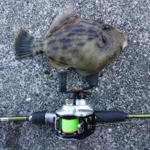 ハギング・・ではなくて、単なる防波堤におけるハゲ釣りのメモ