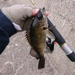 「デイメバは、釣師を育てる魚だからな!」by GOGI