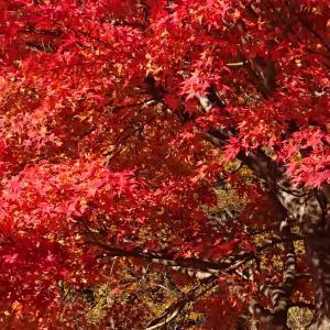 秋の湯沢 2019  その1