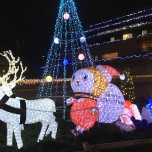 もうクリスマスのイルミネーションが出ていました(1)