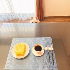 ある日のおやつ。。。治一郎のレモンケーキとしろいのちゃん