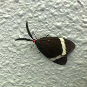 黒うさぎみたいな蛾