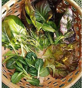 プランター栽培 冬野菜の収穫