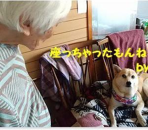 老母 VS  サク