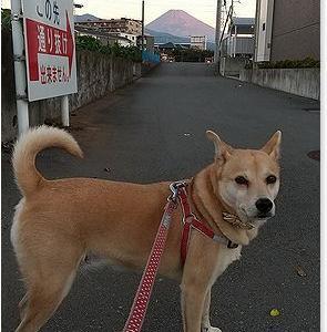 富士山初冠雪 取り消しになりました。