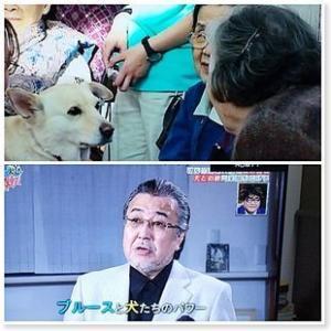 NHK番組「逆転人生 ブルースシンガーの挑戦 犬との絆で笑顔を広げる」