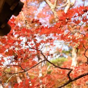 紅葉を楽しみに有馬温泉へPart2