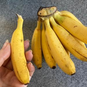そんなバナナ←ふるっ