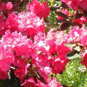 咲く花だけは・・・