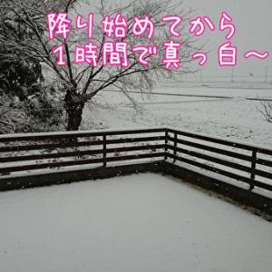 雪ーーーっ!