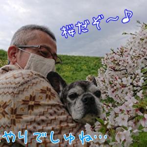 お花見2020~抱っこ編~