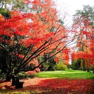南コッツウォルズ旅行〜日本のカエデで有名なウェストンバート国立樹木園