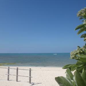 沖縄の植物は難しい