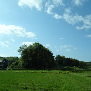 奈良は緑がきれい