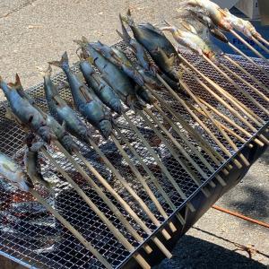川上村で天然鮎をお腹一杯頂きました❣️