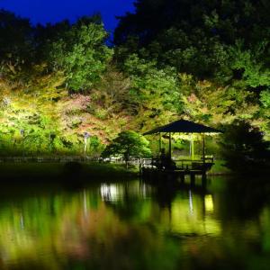 広島・三景園の紅葉のライトアップ@2019-11-02