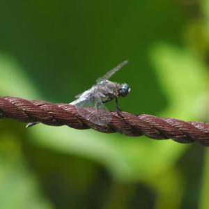 万博公園ハス池の昆虫達@2020-07-19