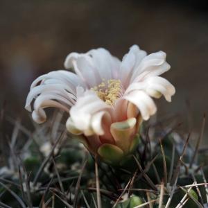 咲くやこの花館(4)@2020-09-15
