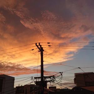 夕方の空と、幼虫くんこんにちは