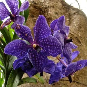 #1344 蘭の花
