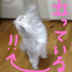 #猫の日#可愛い#スイーツ#頂き物#プレゼント#癒し